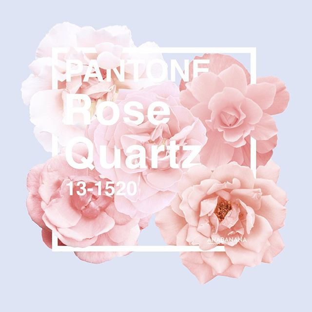 Pantone-rose-quartz-cover